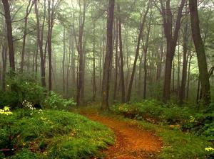 nature-scene-woods-trees