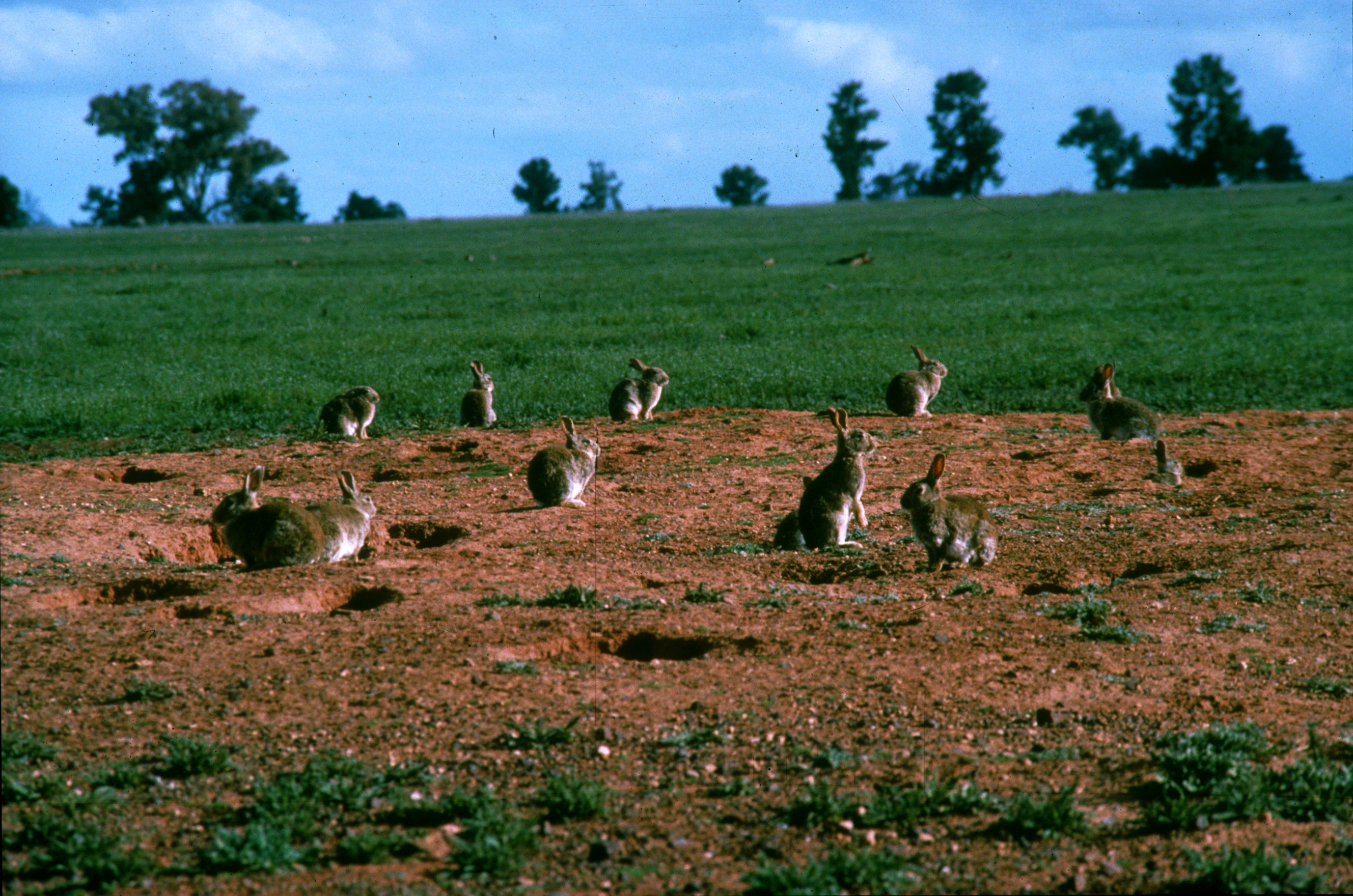 discuss history geography ecology rabbit invasion australia The composition of a given economy is inseparable from civilization's history and social organization, and from earth's geography and ecology, eg ecoregions which represent different agricultural and resource extraction opportunities, among other factors.