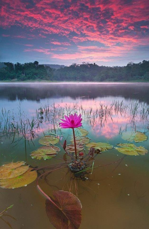 The more deeper the mud, the more beautiful the lotus blooms.  How deep in the mud are you?