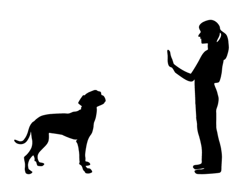 How To Train A Dog To Sit And Stay