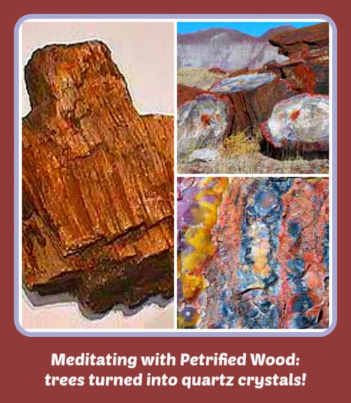 Petrified Wood Collage