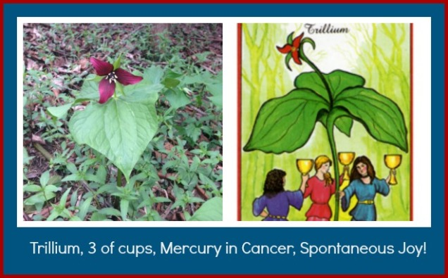 Trillium 3 of cups collage