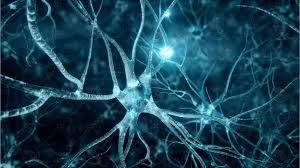 Neurons Gossip