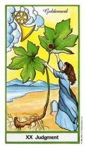 Judgment Herbal tarot