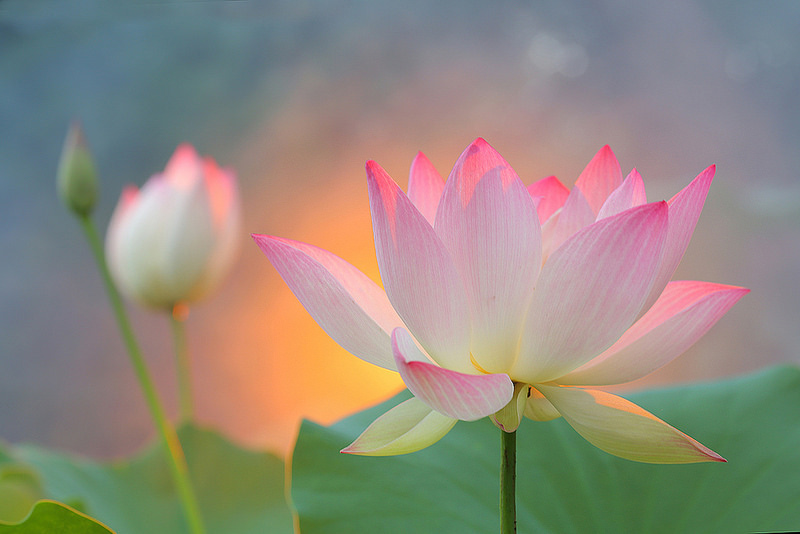 lotus may 2018