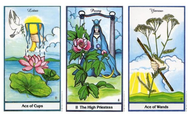 Ace of Cups, High Priestess, Ace of Wands